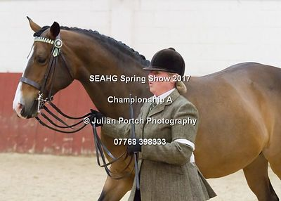 In Hand Classes - South East Arabian Horse Group - Spring Show 2017