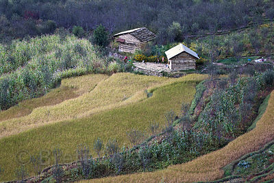 Bucolic farm along the Beas River at Autumn harvest time, Manali, India