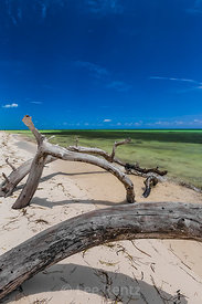 Dead Trees on Beach in Bahia Honda State Park