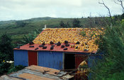 Maize drying on a roof, Rodrigues
