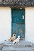 dogs outside a cottage in the fishing village of Kassiesbaai at Arniston, South Africa