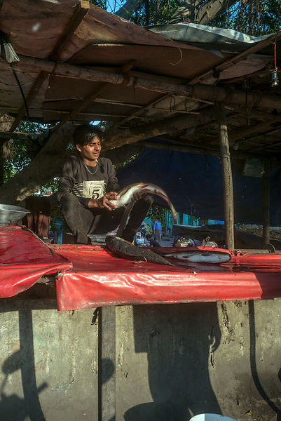 A Man Sells A Large Fish On A Makeshift Stall