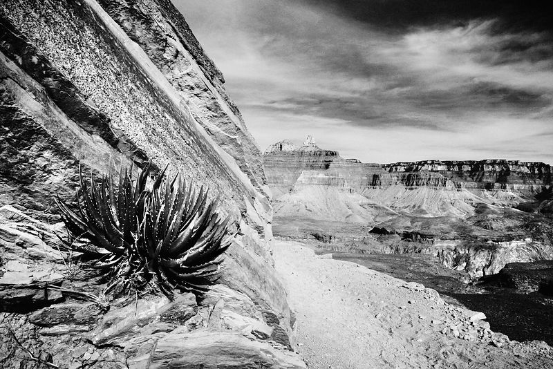 SOUTH KAIBAB TRAIL GRAND CANYON ARIZONA BLACK AND WHITE