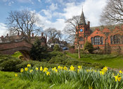 Port Sunlight daffodils at the Lyceum