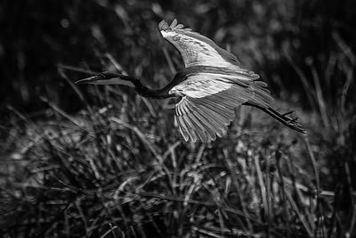 04433-Bird_Laurent_Baheux