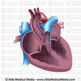 Cardiology and Vascular Diseases Images & Videos