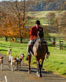 John Holliday and hounds on the Belvoir Estate. The Belvoir Hunt at the Kennels 13/11