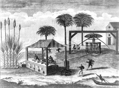 18th-century print of sugar-cane processing