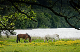 Horses_Loch_Voil