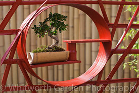 The 'Konpira-san' japanese garden at the RHS Hampton Court Flower Show. © Rob Whitworth