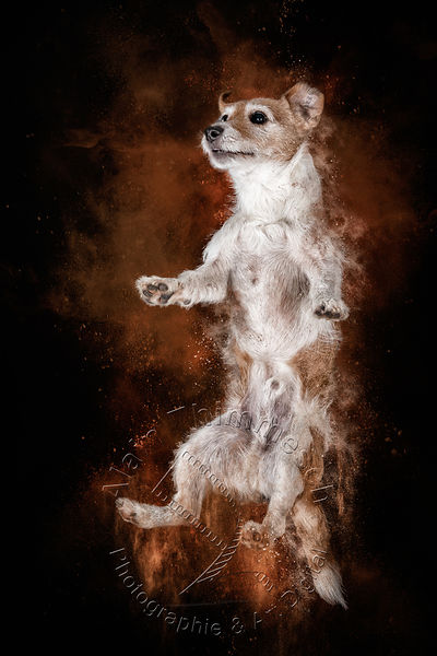 Art-Digital-Alain-Thimmesch-Chien-831
