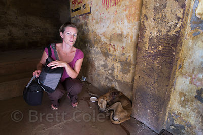 A tourist looks after an injured street dog with a large maggot wound on its shoulder, Varanasi, India. I had a rescue center...
