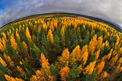Fish eye aerial view of autumnal forest, Finland, September.