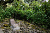 Rwanda, Parc National des Volcans, Volcanos National Park, Dian Fossey's grave next to the gorilla graveyard at Karisoke Rese...