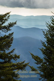 Cascading Hills and Pine Tree Branches, Blue Ridge Parkway, North Carolina, USA
