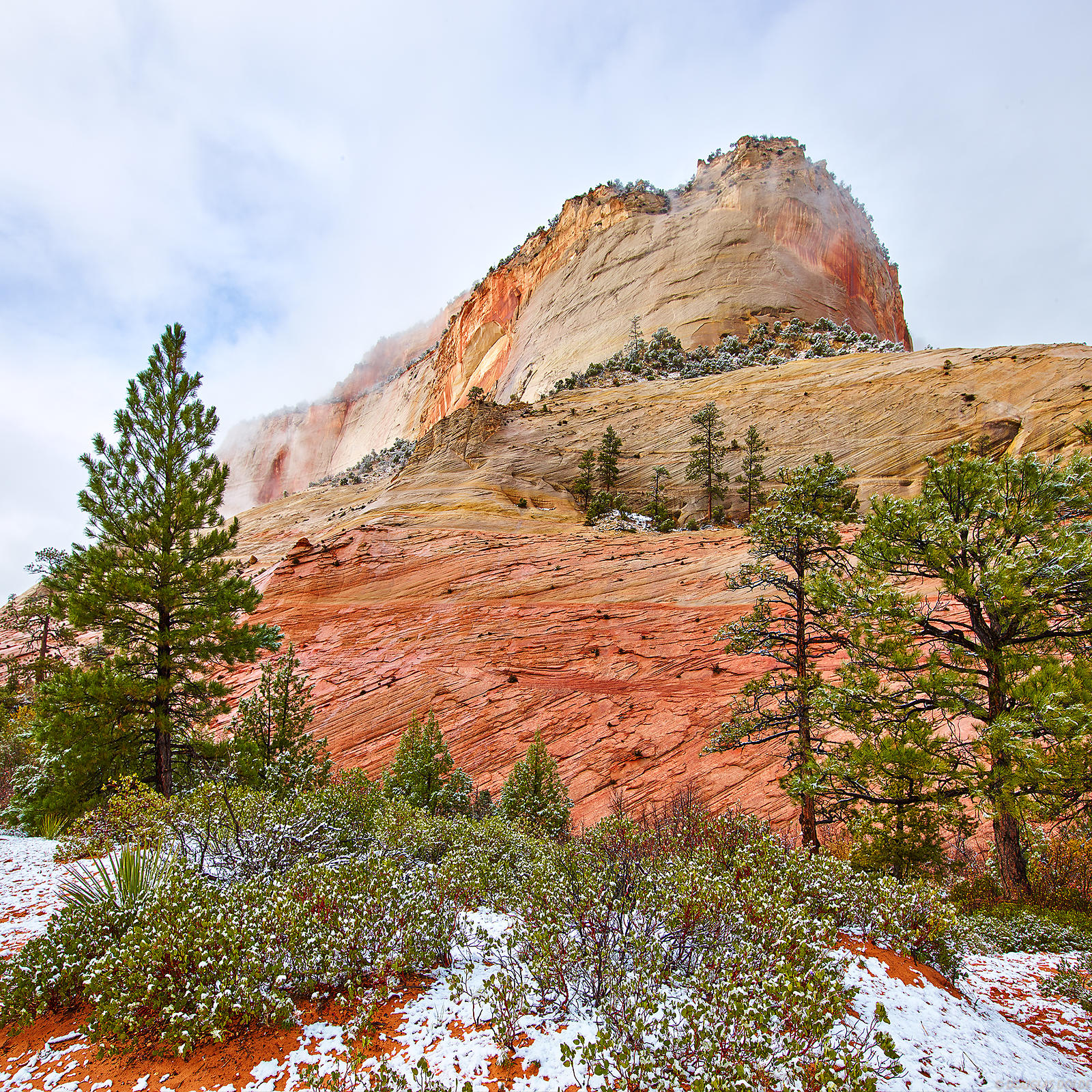 Navajo Sandstone and Firs