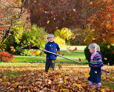 Children raking fall leaves