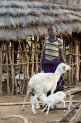 Karamojong boy with sheep in the village, northern Uganda
