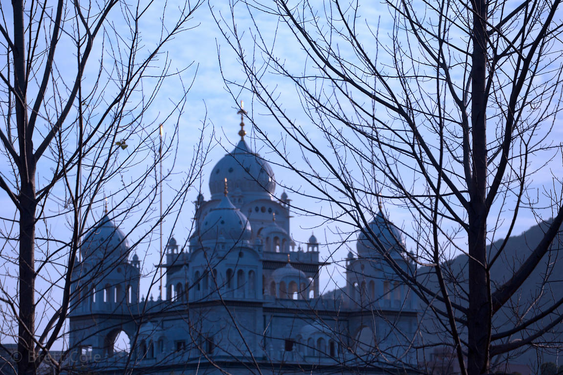 View through trees of Gurudwara Singh Sabha Sikh temple, Pushkar, Rajasthan, India
