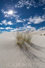 Grasses on Dunes in White Sands National Monument