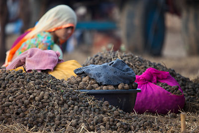 A pile of collected camel dung to be used for fire fuel, Pushkar, Rajasthan, India