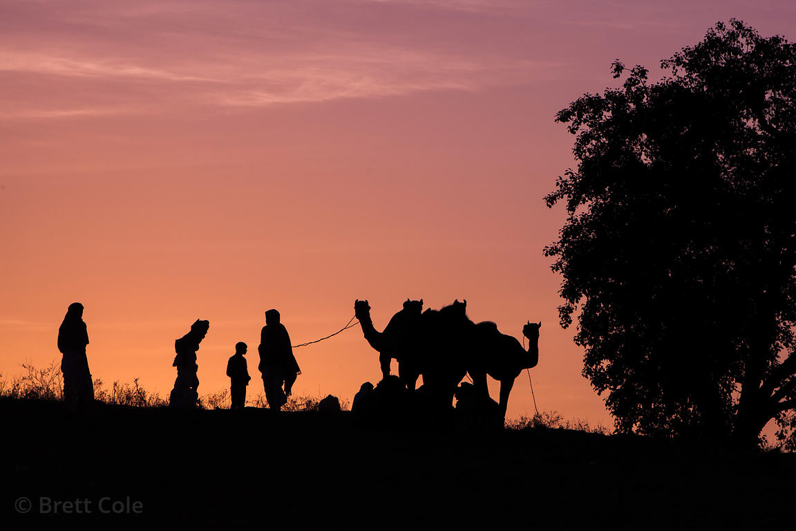 Silhouette of camels and camel herders at sunrise, Pushkar, India.