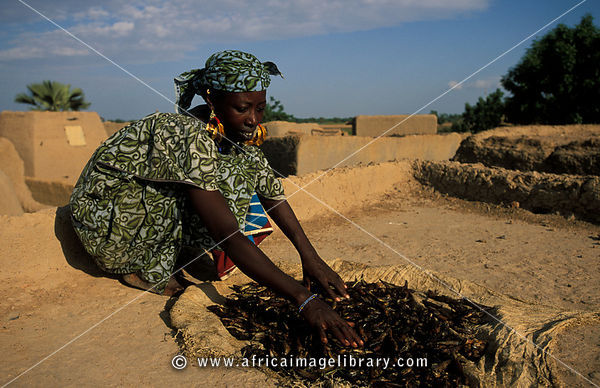 Peul woman with traditional golden earrings drying fish on a flat rooftop of a mud house in a Peul village outside Djenné, Mali