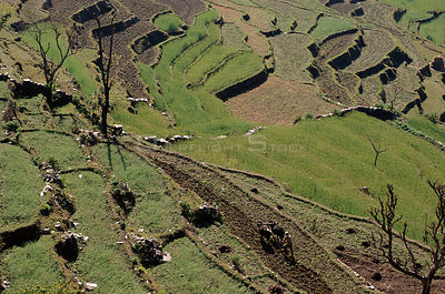 Ploughing a terraced field in the Himalayan foothills near Pokhara, Nepal.
