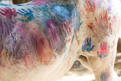 Paint(ing horses