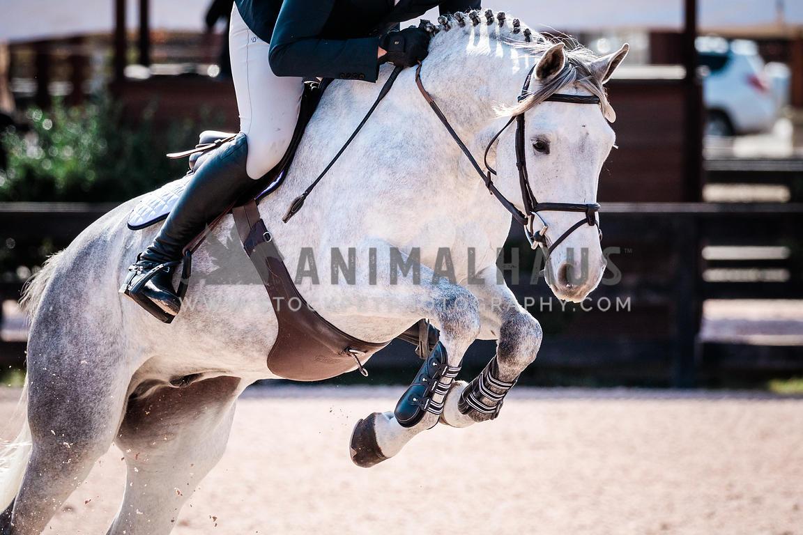 Animalhaus Media White Horse Jumping