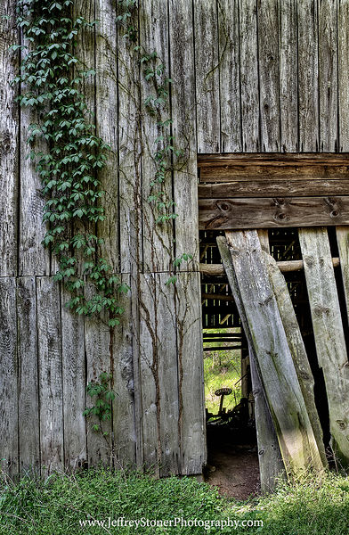Barnwood and Vine