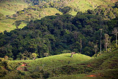 Contrast between pasture and secondary forest, Las Nubes, Costa Rica