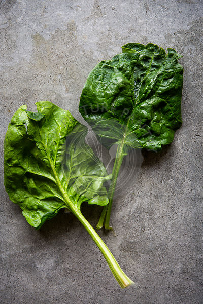 Fresh spinach leafs over grey concrete background with copy space
