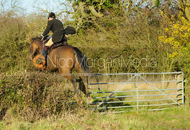 Near Mrs Wilson's covert - The Cottesmore Hunt at Braunston, 12-11-13.