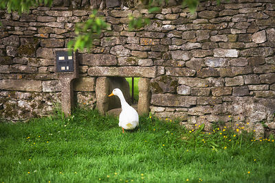 Not strictly in my garden but 20 yards down the road are my village ducks - this is the hole they use to go back into their h...
