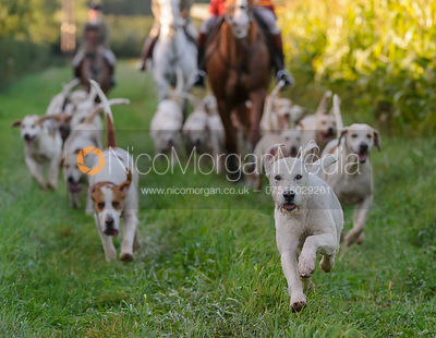 The Cottesmore Hunt at Cow Close Farm 25/9