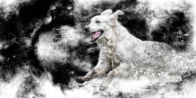 Art-Digital-Alain-Thimmesch-Chien-59