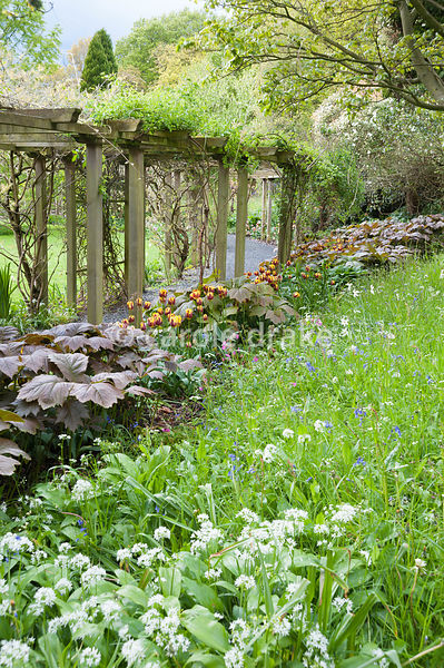 Pergola surrounded by long grasses, tulips and rodgersia. Holker Hall, Grange over Sands, Cumbria, UK
