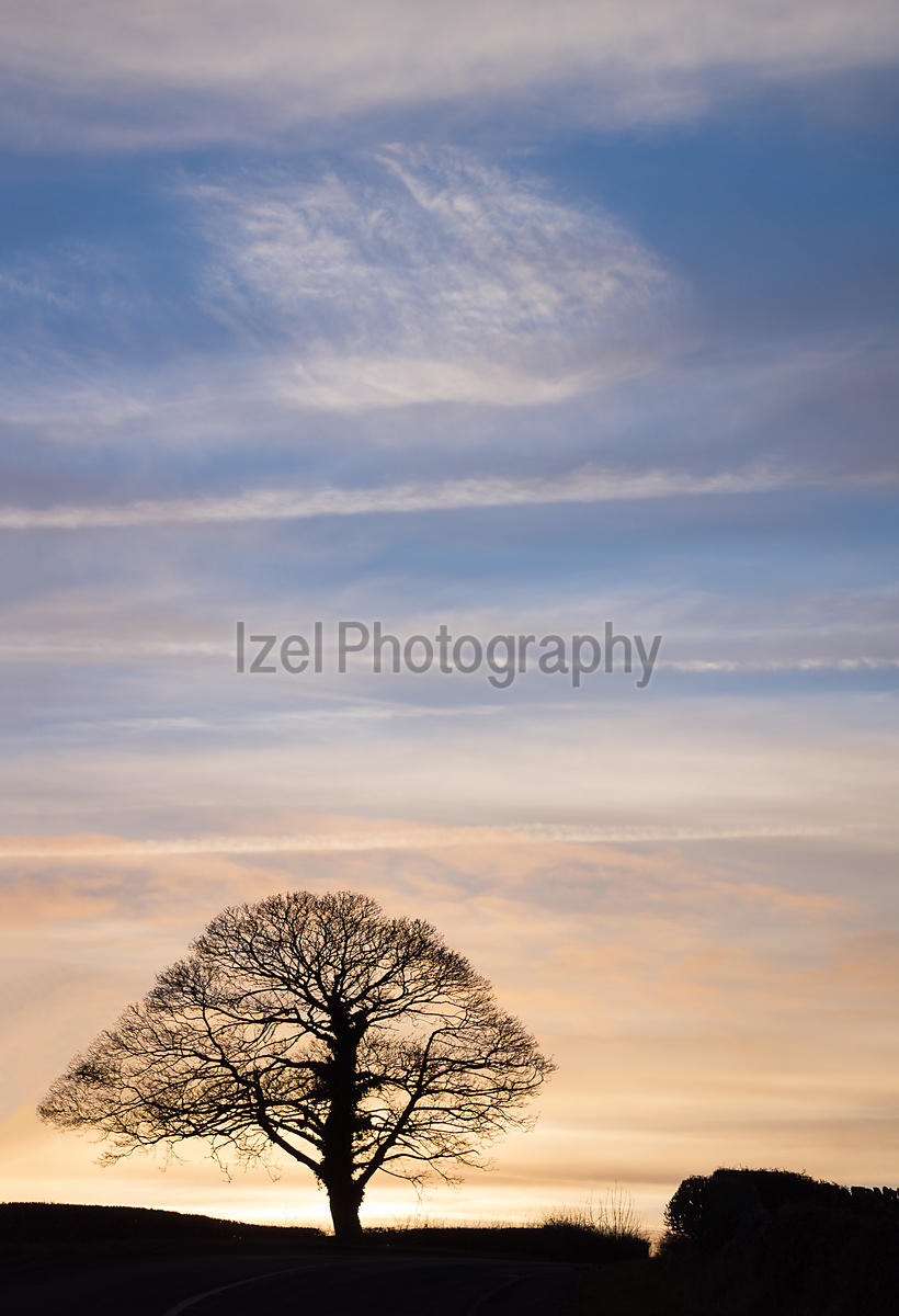 A silhouette of a bare tree at sunset.