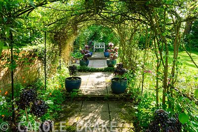 Pergola covered with roses and clematis leads to bench, framed with pots of Aeonium 'Zwartkop'. Beechenwood Farm, Odiham, Han...