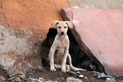Street dog puppy wakes up for the day near the Jama Masjid Mosque, Delhi, India