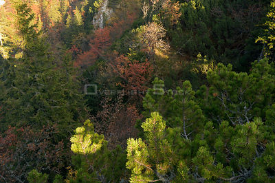 Looking down on forest canopy, Valea Crapaturii, Piatra Craiului National Park, Transylvania, Southern Carpathian Mountains, ...