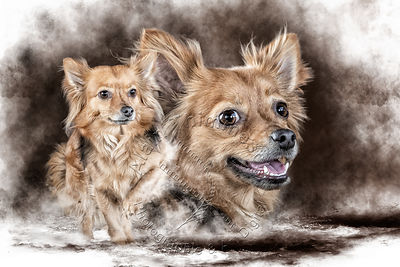 Art-Digital-Alain-Thimmesch-Chien-844