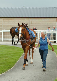 Lass with chestnut in parade ring