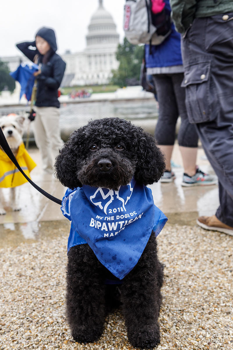 2018 Bipawtisan March with We The Dogs DC