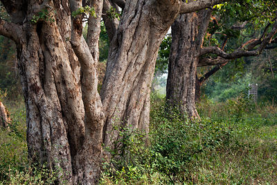 Forest in Keoladeo National Park, Bharatpur, India