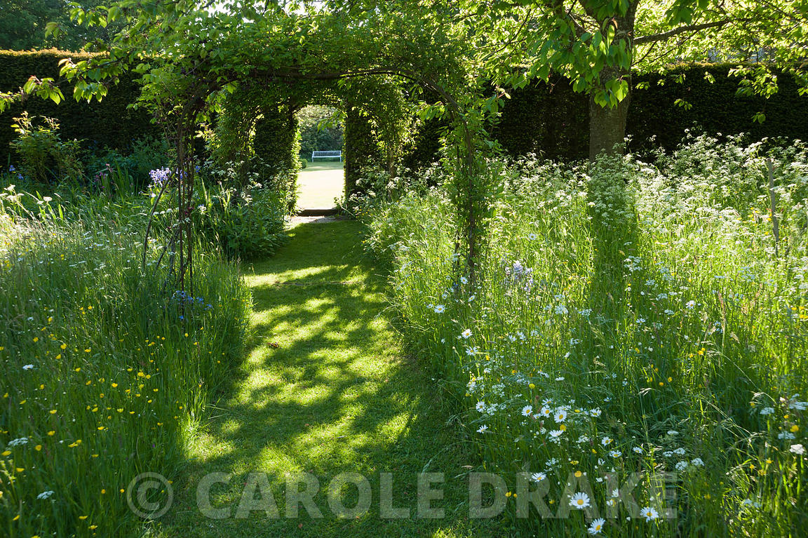 Mown grass path through the meadow full of cow parsley, buttercups, bluebells and camassias. King John's Nursery, Etchingham,...