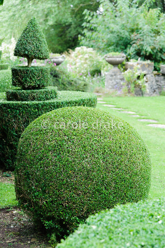 Clipped box topiary shapes line each side of the lawn in the Topiary Garden. Rodmarton Manor, Rodmarton, Tetbury, Glos, UK