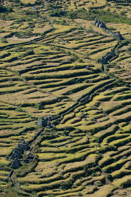 Aerial view of Stupa / Chortens (Buddhist sites) in millet fields, Tamang heritage trail, Gadlang, Langtang region, Nepal, No...