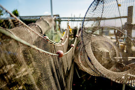 Fishing-net and fish traps hanging